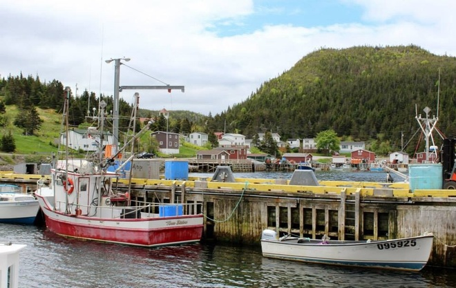 summer in the harbour Petite Forte, Newfoundland and Labrador Canada