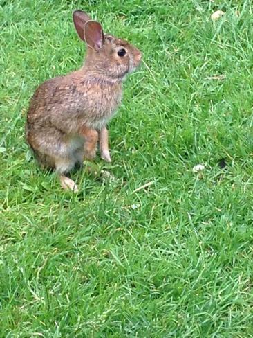 Cute Bunny London, Ontario Canada