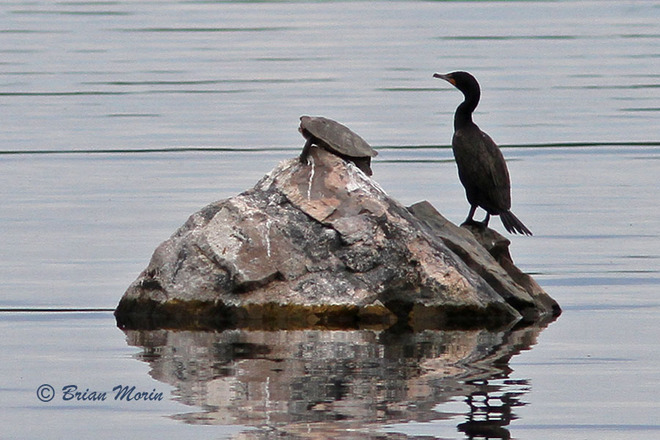 Room for two Mallorytown Landing, Ontario Canada