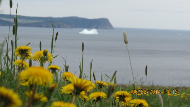 Iceberg watching Conception Bay South, Newfoundland and Labrador Canada