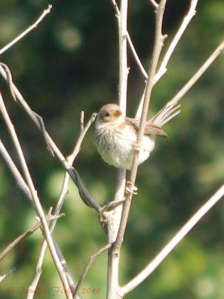 1st Annual Pa. Breeding Bird Blitz