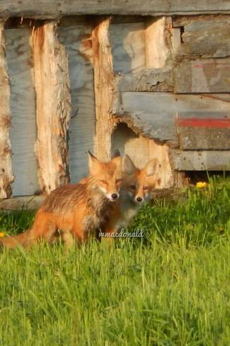 Momma and pup Olds, Alberta Canada