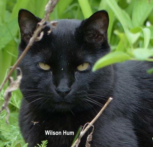 Wild Cat Ottawa, Ontario Canada