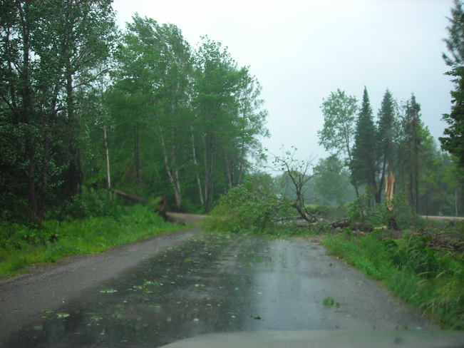 Trees downed by Hurricane Arthur winds Unnamed Road, McAdam, NB E6J, Canada