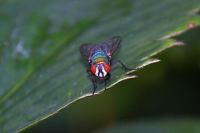 Fly Surrey, BC