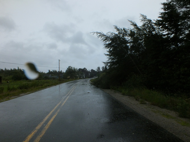 Downed trees in Sluice Point. Sluice Point, NS
