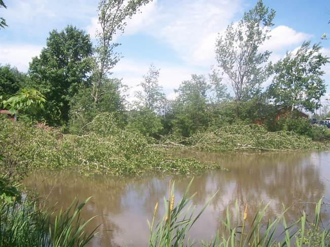 Multiple Trees down in Pond Fredericton, NB