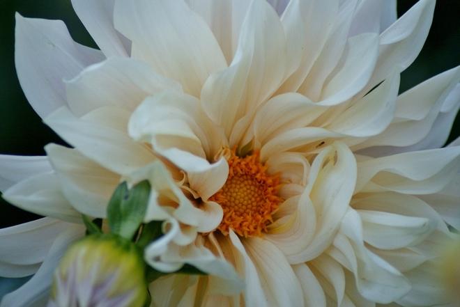 FLOWERS Burlington, ON