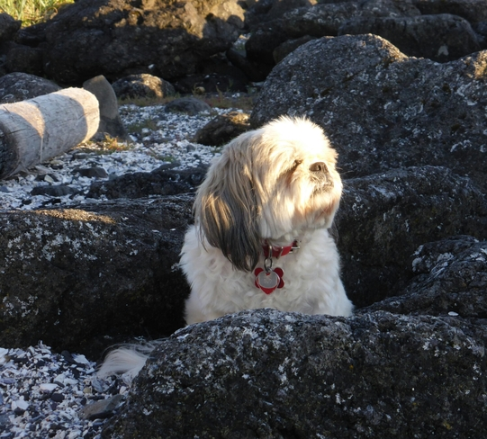 Molly enjoying the last of the day's sunshine Ucluelet, BC