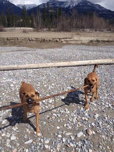Branch Manager and Assistant Golden, British Columbia Canada