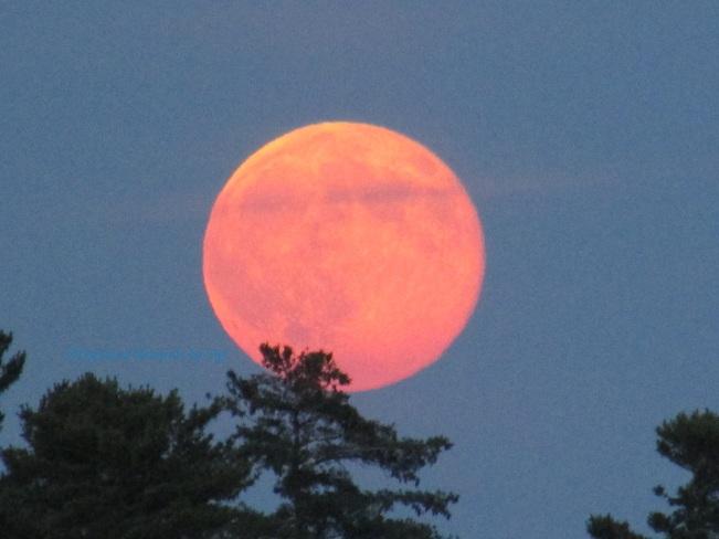 Super Moon July 12, 2014 at 9 pm Hudson, Quebec
