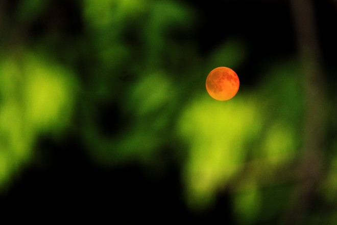 The Super Moon at 1040pm.With a tree for Green. calgary ab