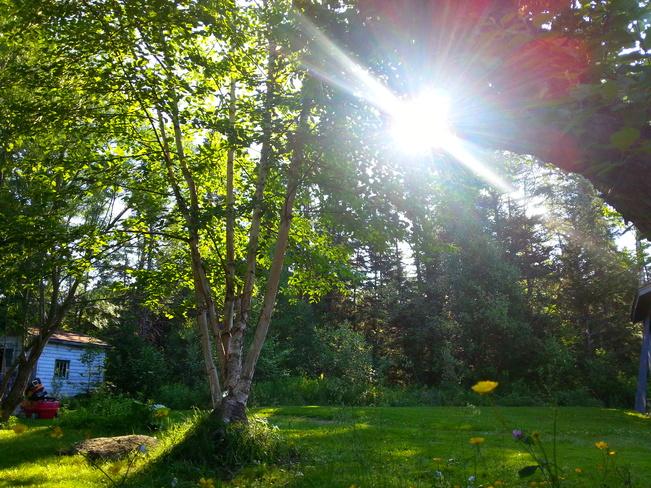 Good Morning Sunshine Glovertown, NL