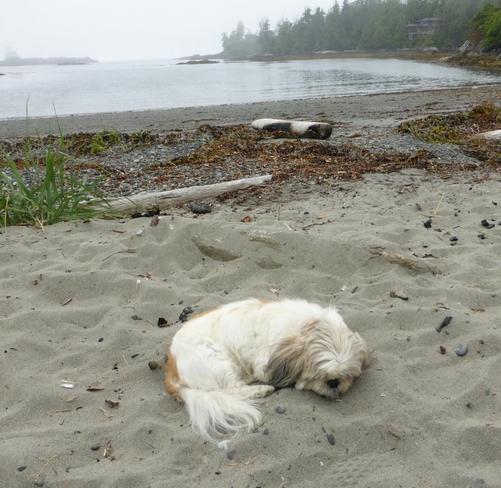 Sleeping on the beach Ucluelet, BC