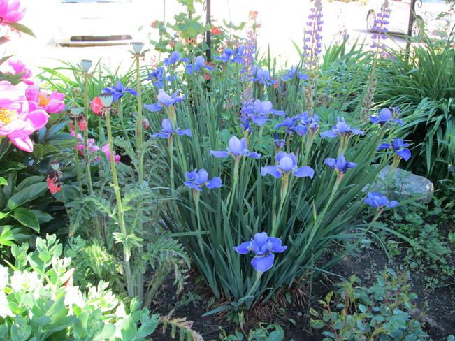Beautiful Flowers Elliot Lake, ON