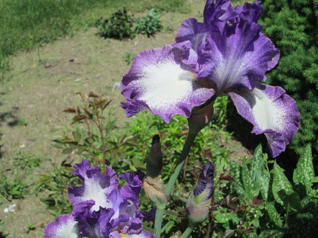 Beatiful Flowers Elliot Lake, ON