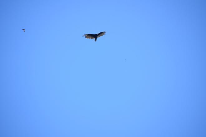 birds Kelso Road, Milton, ON