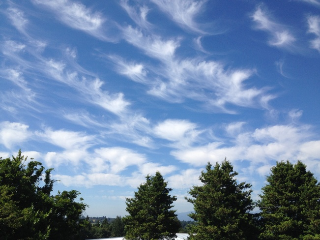 Mare's tail clouds Abbotsford, British Columbia Canada
