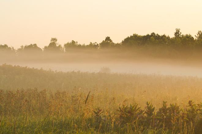 Field of Fog Kingston, ON