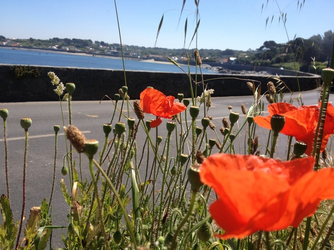 Poppy's at Perelle Guernsey Saint Peter Port, Guernsey