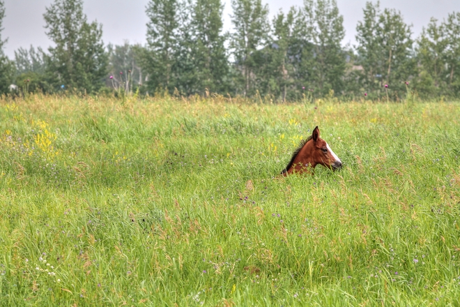 Young Colt Colonsay, SK