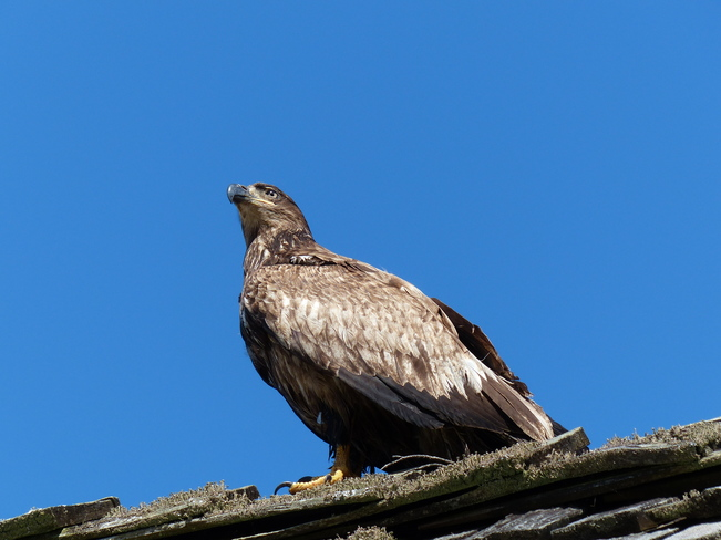 Golden Eagle Tofino Ucluelet Highway, Ucluelet, BC