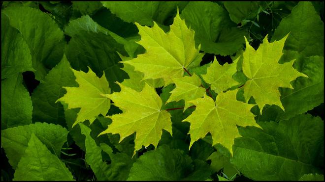 Leaves on leaves' Elliot Lake.