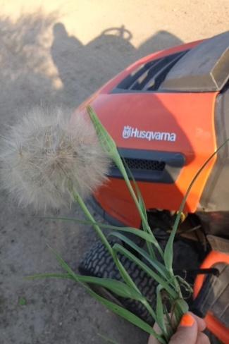 biggest blow flower Martensville, Saskatchewan Canada