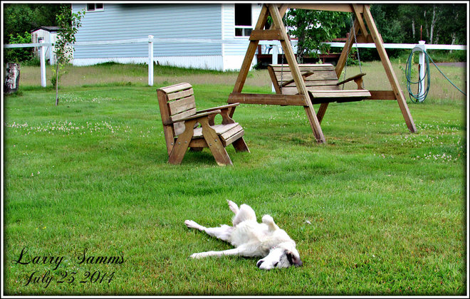 """Morning Roll"" Springdale, Newfoundland and Labrador Canada"