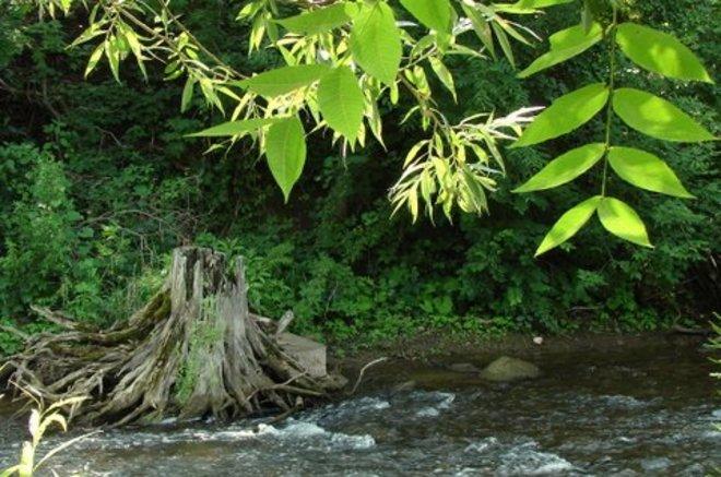 River scene Norval, Halton Hills, ON