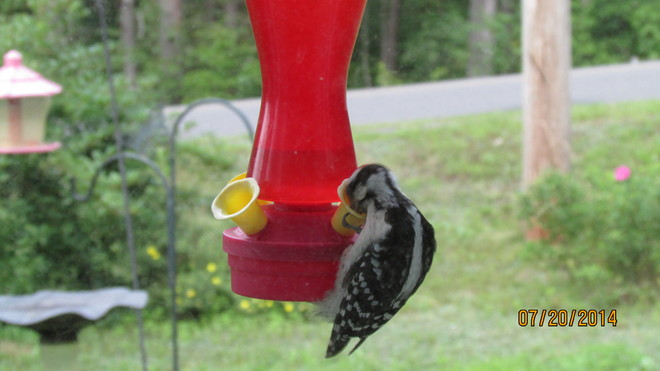 Over sized Humming Bird! Coldbrook, NS