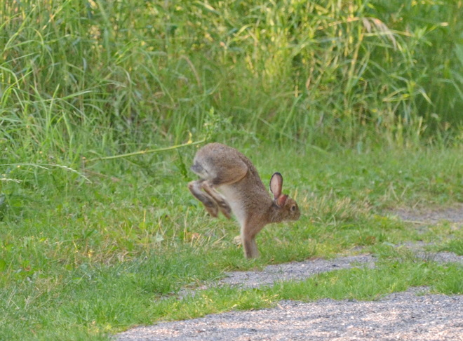 I am all grown up now & still hopping in mid air Lively, Greater Sudbury, ON