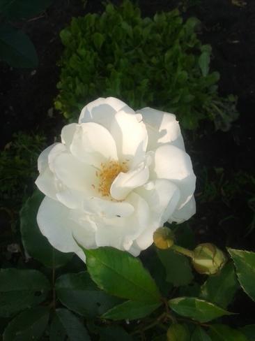 My Flowers Vegreville, AB