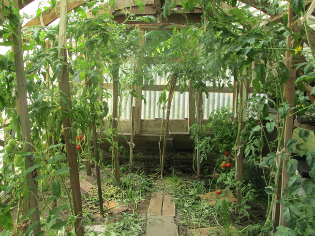 veggie garden Surrey, BC