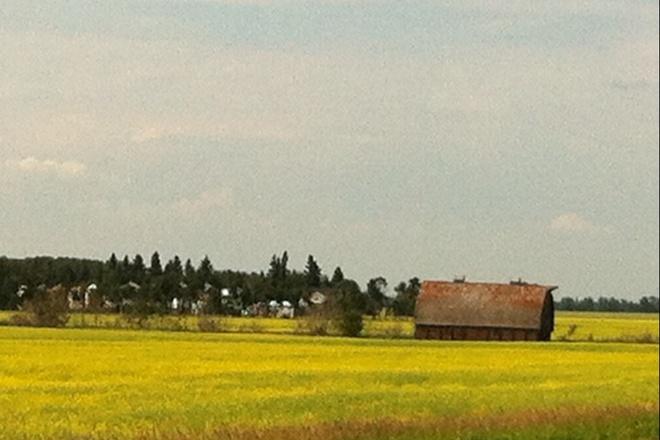Saskatchewan fields Leoville, Saskatchewan Canada