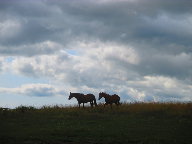 Horses on the Hill Uxbridge, ON