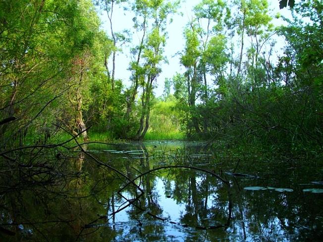 Wetlands North Ridge, Ontario Canada