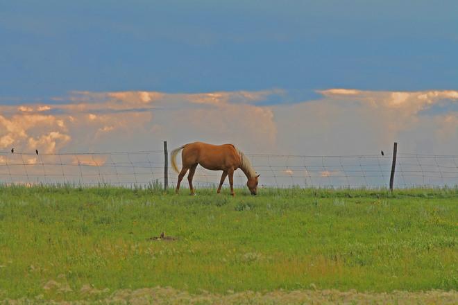 Horse Against A Low Sky Saskatoon, SK