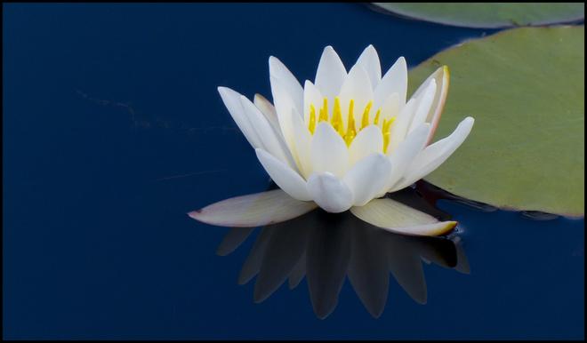 A lily, Elliot Lake.