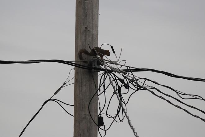 Confused Red Squirrel Regina, SK