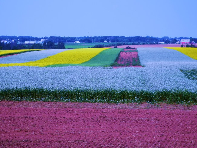 summer colors Summerside, Prince Edward Island Canada