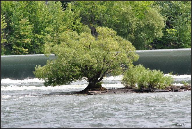 Le vielle arbre ... Chambly, QC