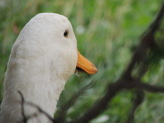 Barnyard Friends Nanticoke ON