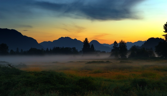 Early morning in the meadows Pitt Meadows, BC, Canada
