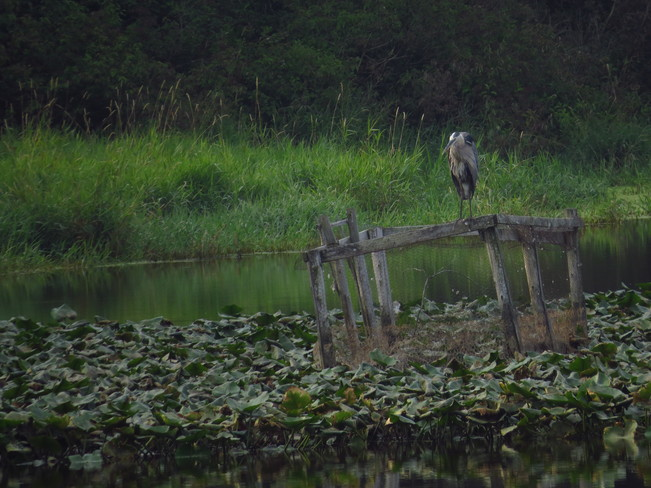 The Heron Waterford, ON