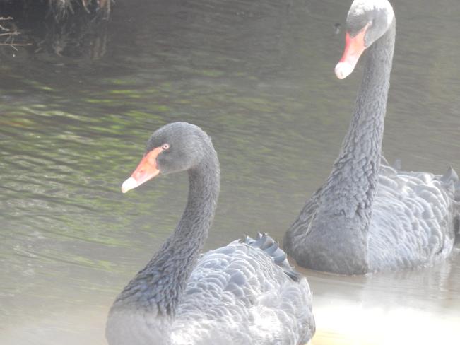 Zoo Birds Moncton, NB