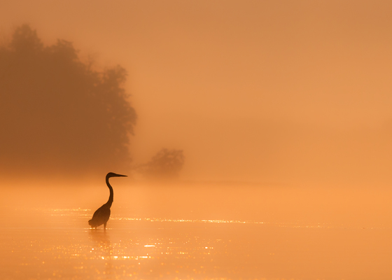 2c. Misty sunrise