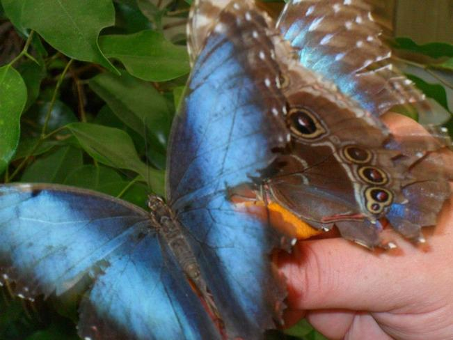 Butterflies eating out of my hand Moncton, NB