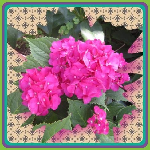Flower of the Sun Hanover Ont.
