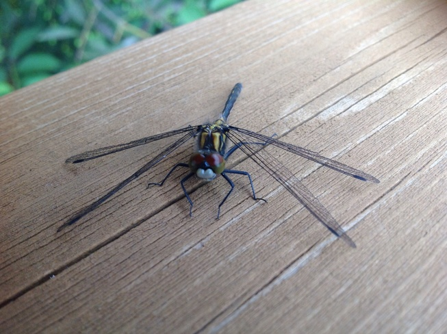 Dragon Fly Fort McMurray, AB
